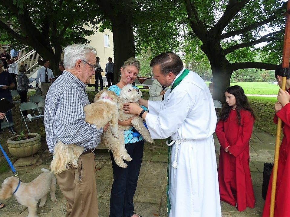 Blessing dogs